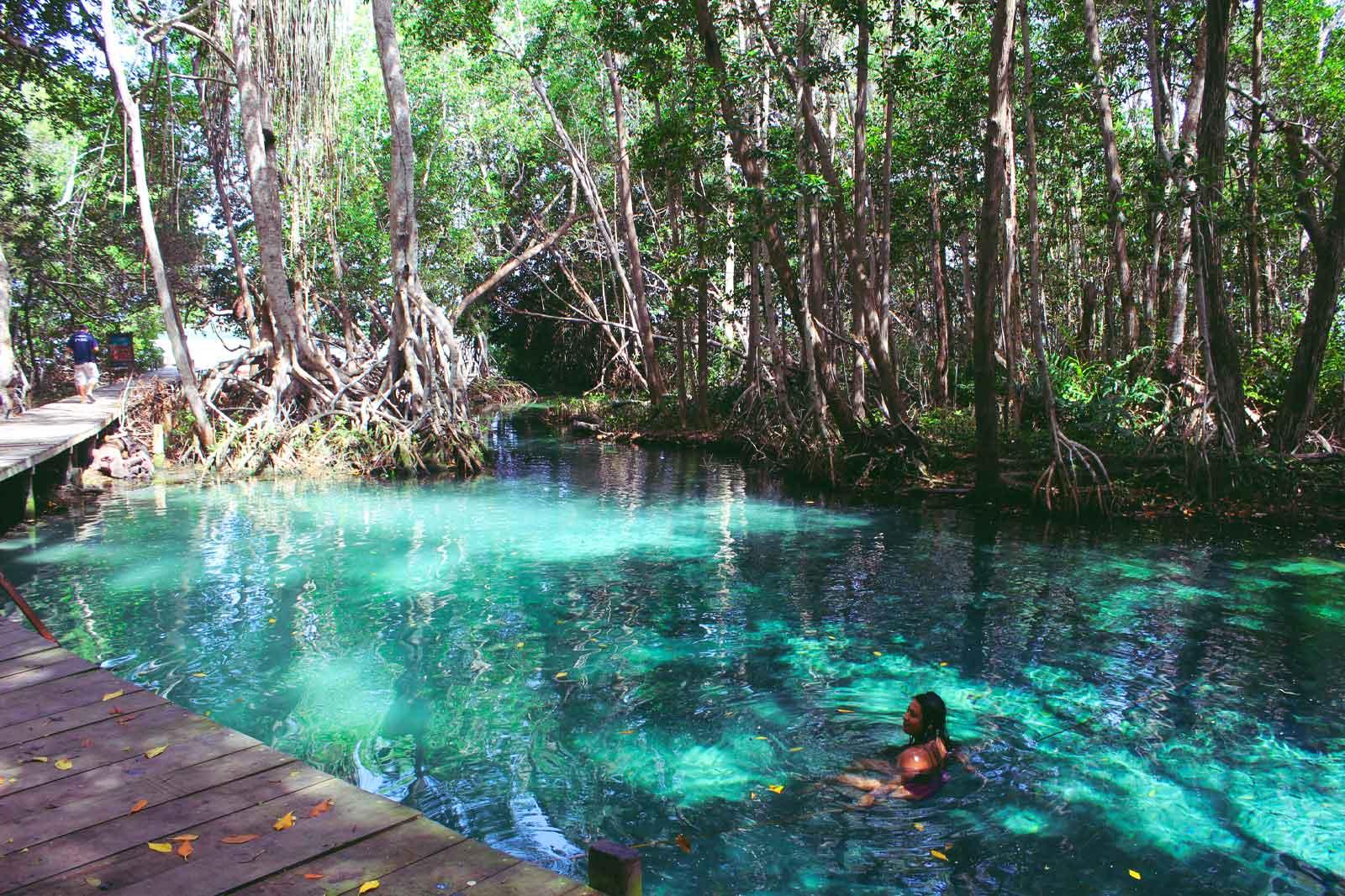 mexicofinder-travel-yucatan-celestun-flamingos-mangroves