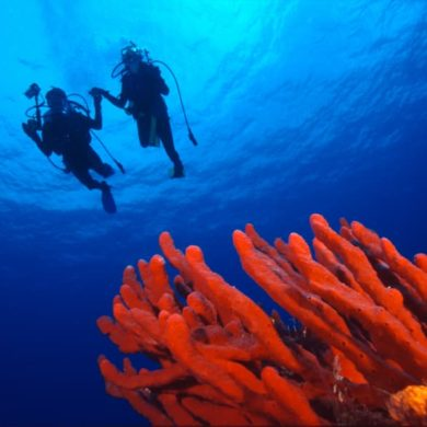 mexicofinder cozumel diving paradise